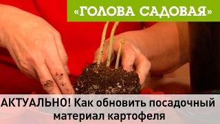 видео Посадочный материал. Многолетние и почвопокровные растения. Лапчатка