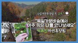 [국립자연휴양림x숲해설가 김포스] 촉촉한 가을비와 함께…