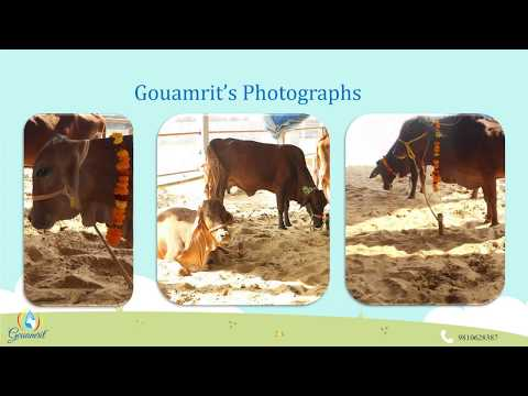 100% Pure and Natural A2 Cow Milk Products | Gouamrit