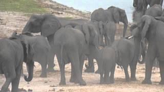 Voyage Botswana : Troupeau d'éléphants | Meltour