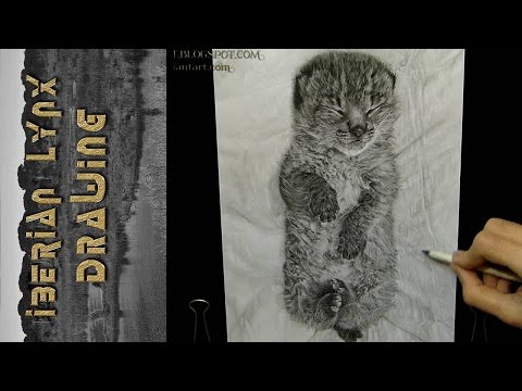 Iberian Lynx Drawing (Lince Ibérico)