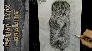 Iberian Lynx - Drawing