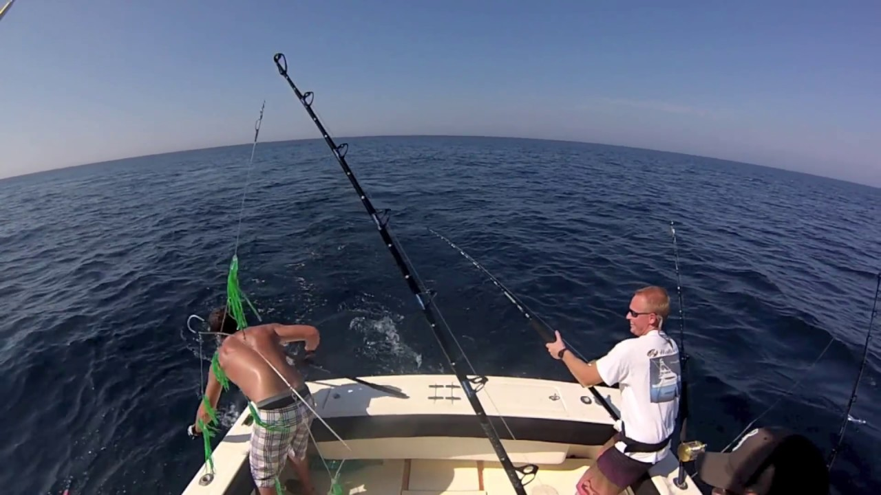 Longfin albacore offshore tuna fishing virginia beach for Virginia out of state fishing license