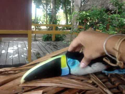 toucan massage.MPG