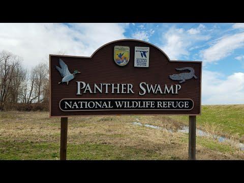 Panther Swamp Cabin Rental