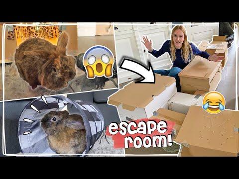 MEGA ESCAPEROOM 2.0 VOOR MIJN KONIJN MAKEN! BUNNY SLOOPT ALLES 😅 Vlog #62 | Daphne draaft door