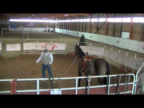 Horse Training - Restarting an Older Horse