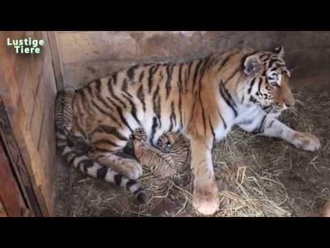 Nette Baby-Tiere in Zoo Compilation 2015 [NEU HD VIDEO]