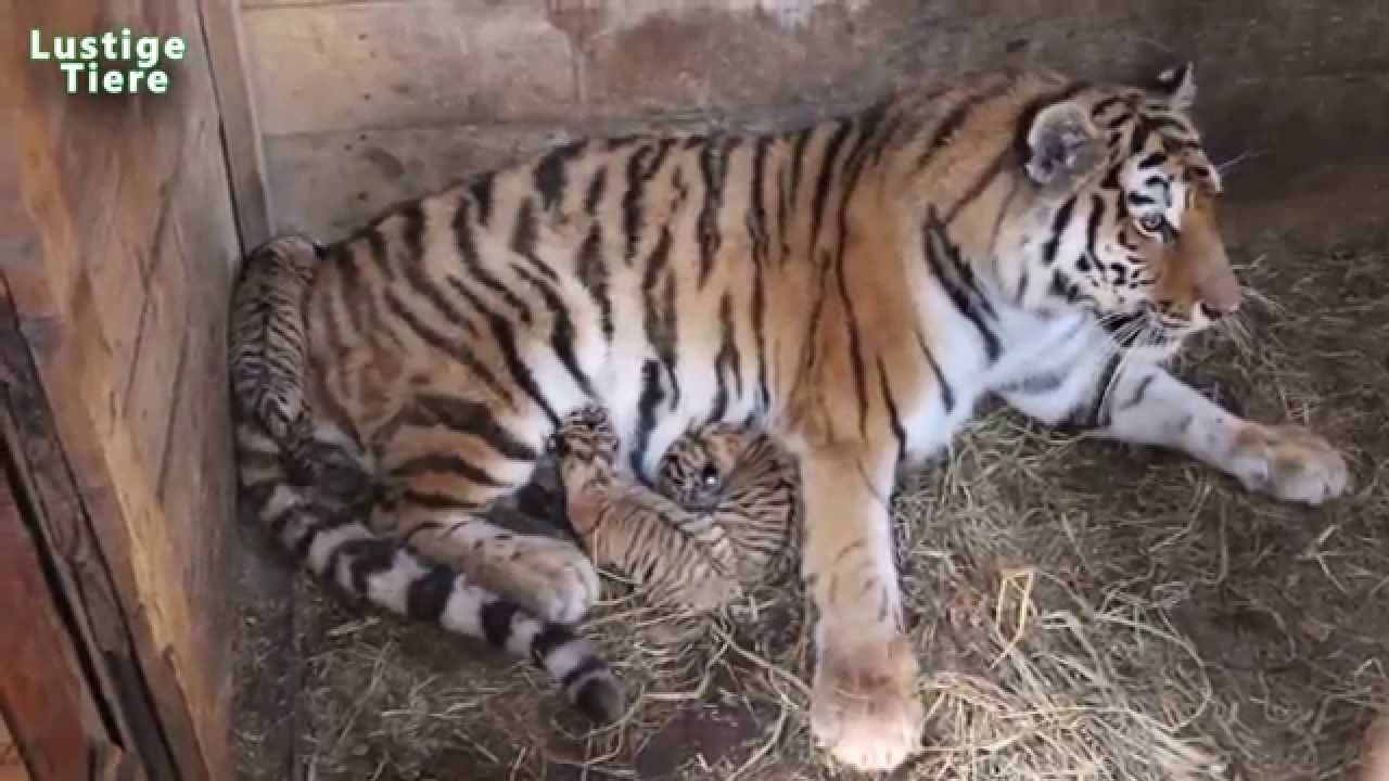 Nette baby tiere in zoo compilation 2015 neu hd video youtube