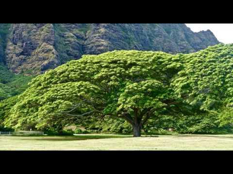 Hawaii Nature sounds, Birdsong, Birds singing, relaxing sounds