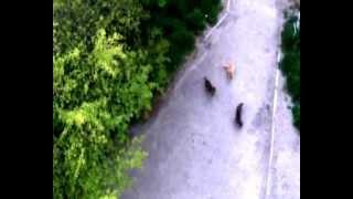 Лазер и кошки