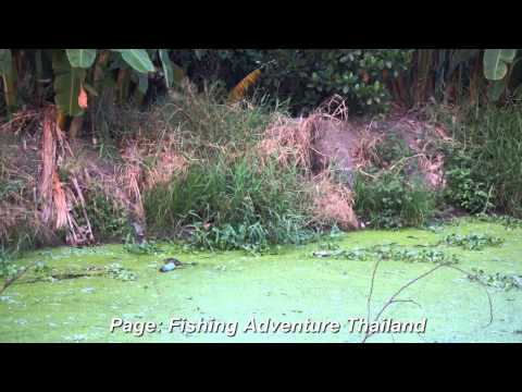 Fishing Adventure Thailand by Nopbkk - Lucky Rat vs Varanidae