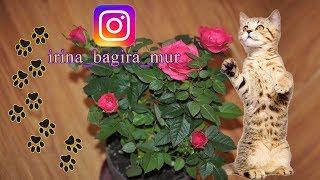 Защита комнатных цветов от кошачьих 🐱 protection of house flowers from cats