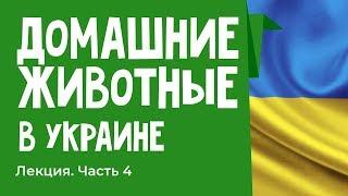 """Особенности содержания животных в Украине Лекция """"как у них"""""""