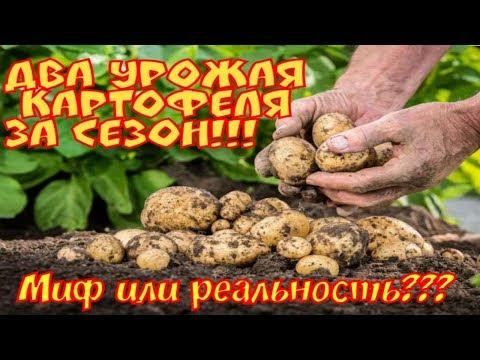 Два урожая картофеля за сезон.Миф или Реальность?