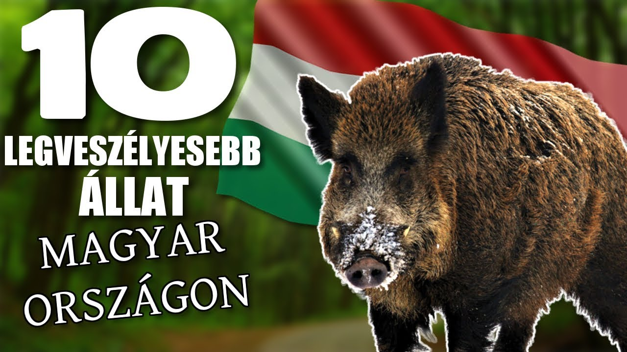 Vadon élő állatok magyarországon