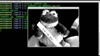 Imagemagick - Black and White and Negative - Tutorial - BASH - Linux