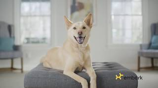 Learn About Your Best Friend With Embark! thumbnail