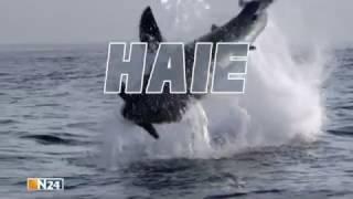 Hai   Doku 2016