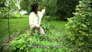 Concevoir son jardin et sa vie avec la permaculture (sous-titres français)
