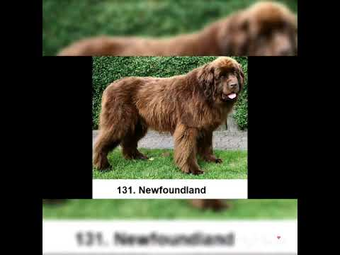 Worlds All 198 Dogs breeds!!Pets & Animal.