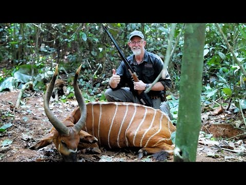 The Kings of Cameroon - A Bongo hunting short film by Melcom Van Staden