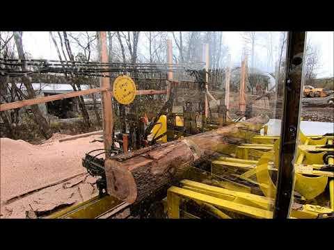 sawing a walnut 6x12 beam