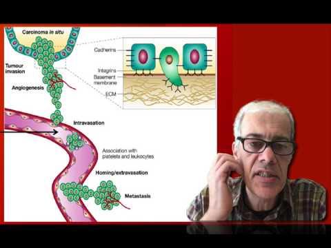 1.6 Metastasis and Angiogenesis