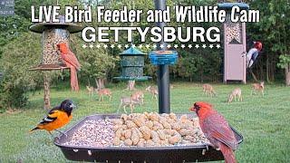 LIVE Bird Feeder Cam  Gettysburg PA (over 30 species identified)