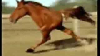 Лошадь на двух ногах - Retarded Running Horse