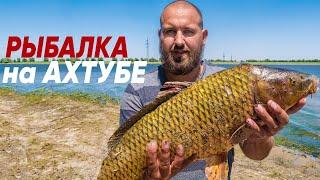 Рыбалка на сазана в Астрахани 2021 САЗАН НА ЗАКИДУШКУ и САМОДЕЛЬНЫЙ ЖМЫХ макуху В ПОИСКАХ САЗАНА