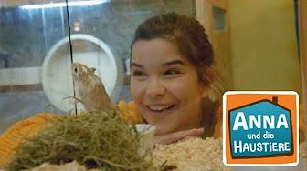 Anna Und Die Wilden Tiere Youtube