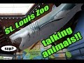 Animals TALK at the St  Louis Zoo!