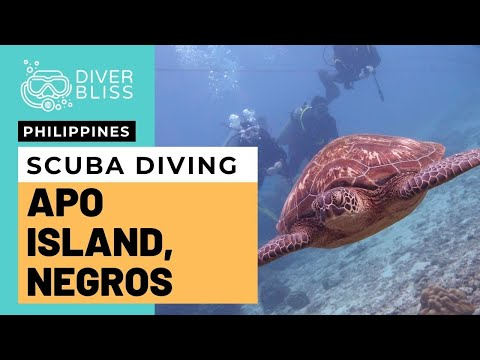 scuba-diving-in-apo-island,-negros-oriental,-philippines-|-best-diving-in-dumaguete