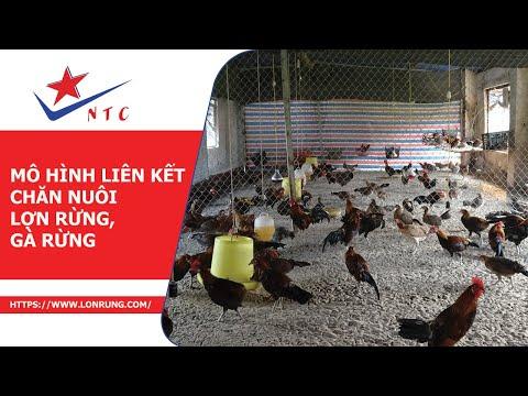Bạn của nhà nông VTV2 - Mô hình liên kết chăn nuôi lợn rừng, gà rừng