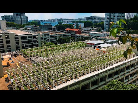 Singapore's Bold Plan to Build the Farms of the Future