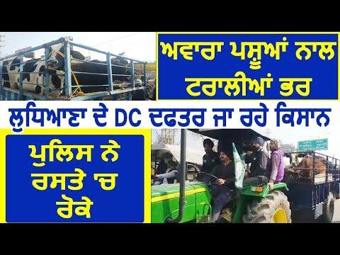 Breaking: आवारा पशुओं को Ludhiana के DC दफ़्तर लेकर जा रहे किसानों को Police ने रास्ते में रोका