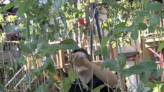 Easy Trellises For Beans And Peas