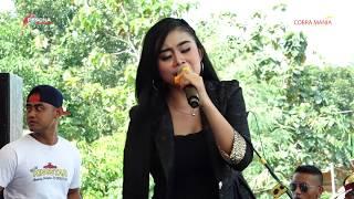 Maha Cinta Laras Melonia New King Star Cobra Mania Pakis Kradenan
