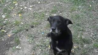 Как мы пытались лечить уличных собачек от лишая. История брошенной собачки
