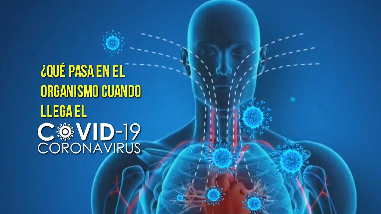 Qué pasa en el organismo cuando te da la COVID-19? | Comisión UNAM COVID-19