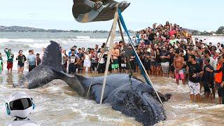 10 Трогательных Спасений Китов, Снятых На Камеру