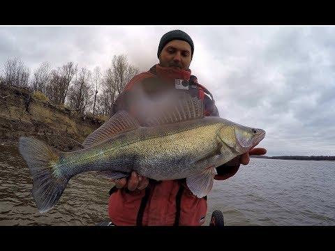 СУДАЧИНА ВЛЕТЕЛ!! Раздача щуки в корягах!Рыбалка на джиг ,Fishing For Zander. Fishing In Russia
