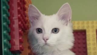 Учёный кот - Школа электронного образования ИНТехнО - Электронные уроки