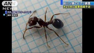 国内で確認が相次いでいるヒアリについて、環境省や東京都などは今月、...