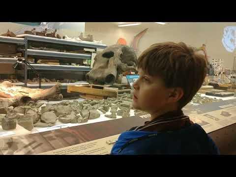 Carnegie Natural History Museum