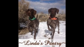 ~sages (german Shorthair) First Litter Birth With Linda's Pantry~