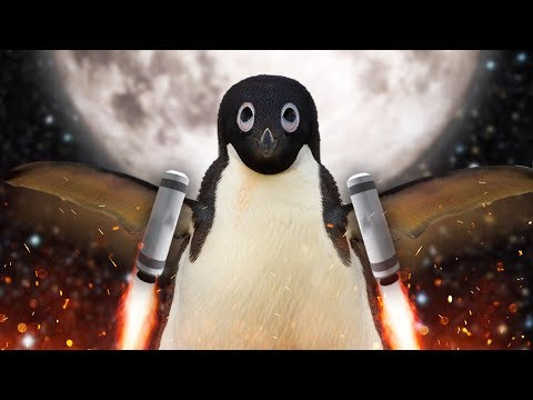 NOOT NOOT | Learn To Fly 3 #1