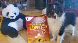 Best Training Treat  for your Puppy