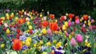 CARLOS Y JOSE ..........Flor de las flores